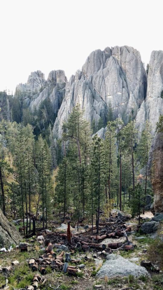 Needles highway 4