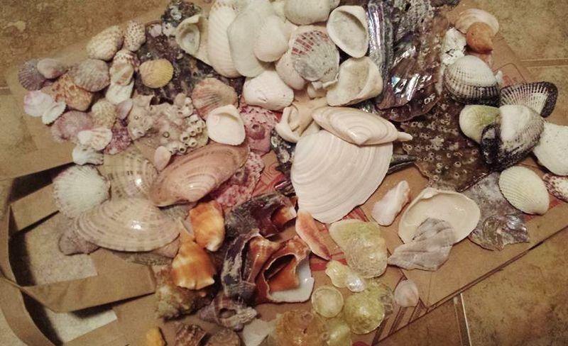 Shells 2 (2)