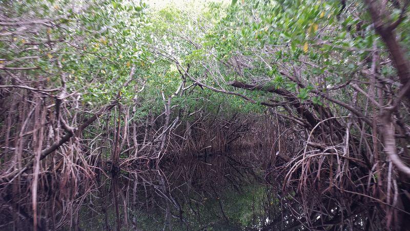 Everglades hazy
